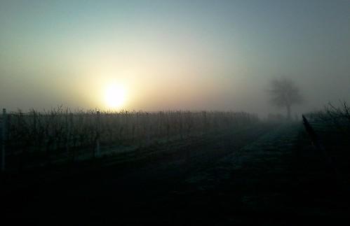 sunrise germany deutschland sonnenaufgang pfalz rheinlandpfalz weingarten palatinate