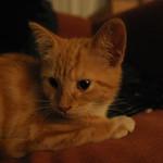 Orange cat on red sofa