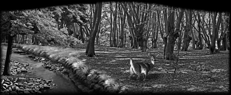Deer and creek woods