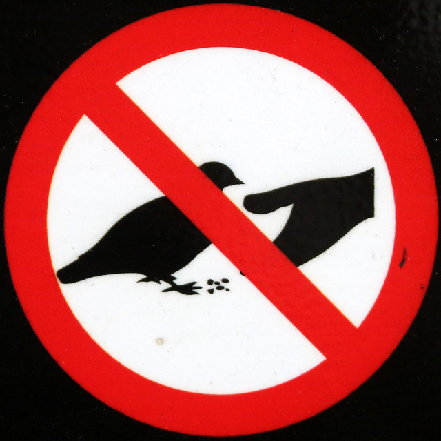 No pigeon or squirrel feeding