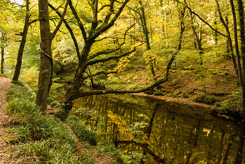 trees river reflection autumn fall colour riverbank leaves sedges gold green brown outdoor devon dartmoor nationalpark england uk teign valley landscape