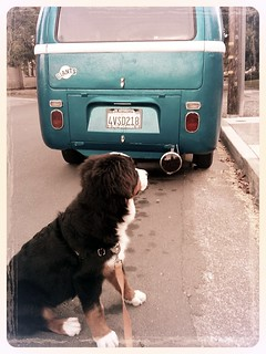 vw bus + rosie | by BikeTinker