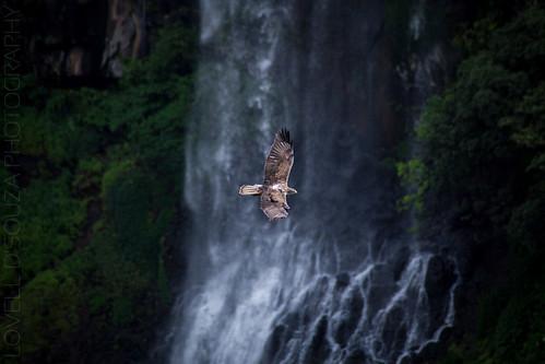 india eagle windmills waterfalls maharashtra thoseghar chalkewadi
