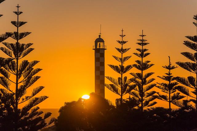Sunset Through Pines