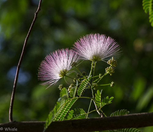 Brush and Fern | by Whisle (Clyde Cornett)