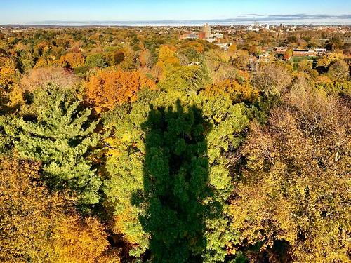 tower shadow washingtontower autumn pw seasonal foliage massachusetts seasons trees cemetery mountauburncemetery boston fall leaves newengland