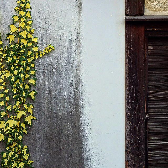 構成=Composition-99/Leaves living with a black-and-white wall