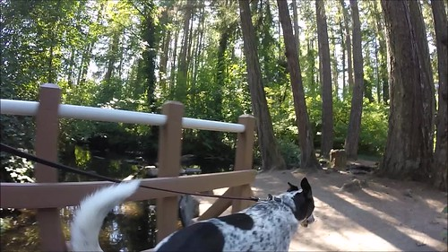 dog walking spanawaylakepark washington leash summer gopro hero3silver blanca bordercolliemix