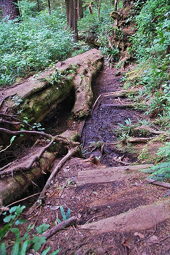 Rough trail to Raft Cove, Raft Cove Provincial Park, West Coast Vancouver Island, British Columbia, Canada