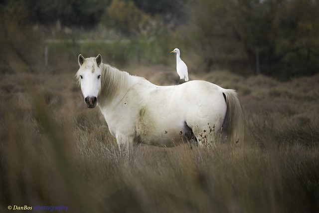 Camargue friendship