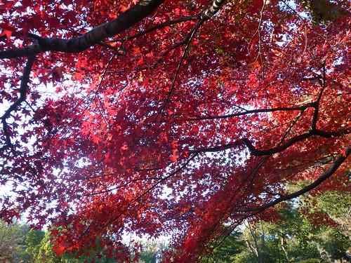 2013/11/30 (土) - 15:11 - 鎌倉の紅葉 ー 鎌倉宮