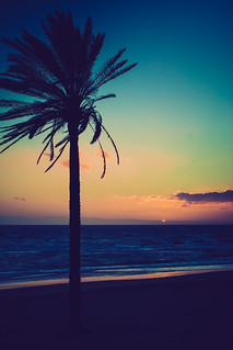 Palm Trees & The Mediterranean Sea at Sunset | by nan palmero