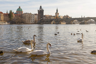 Swans on the Vltava and the Charles Bridge | by Luke Robinson