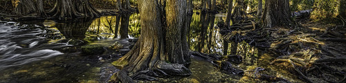 cibolocreek boerne water roots colorful dawn sunrise panorama olympus 180degrees
