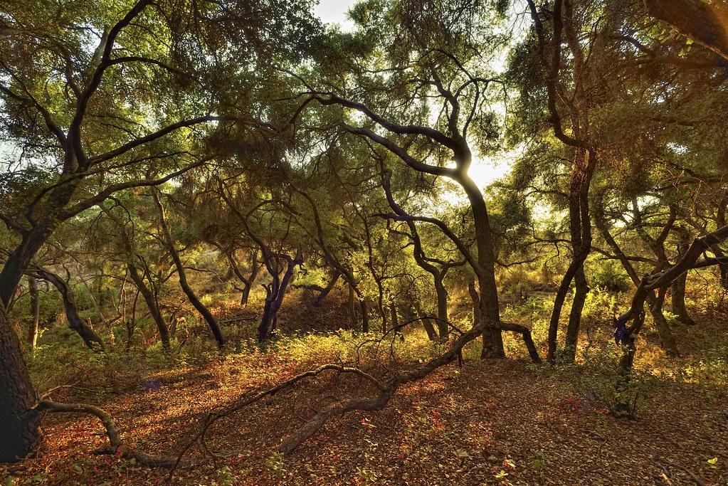 nikon nikkor 15mm 5.6 D800 Lake hodges scrub oaks 2