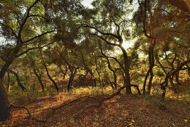nikon nikkor 15mm 5.6 D800 Lake hodges scrub oaks 2