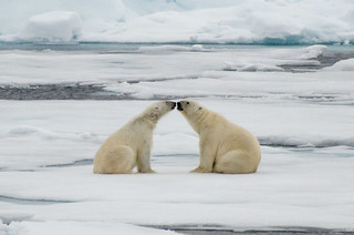 Touching noses