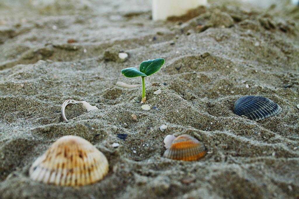 La Forza Della Vita Claudio Flickr