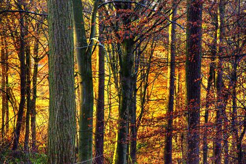 trees light sunset england walking woods europe cheshire britain hdr sandstonetrail mygearandme berwardsley