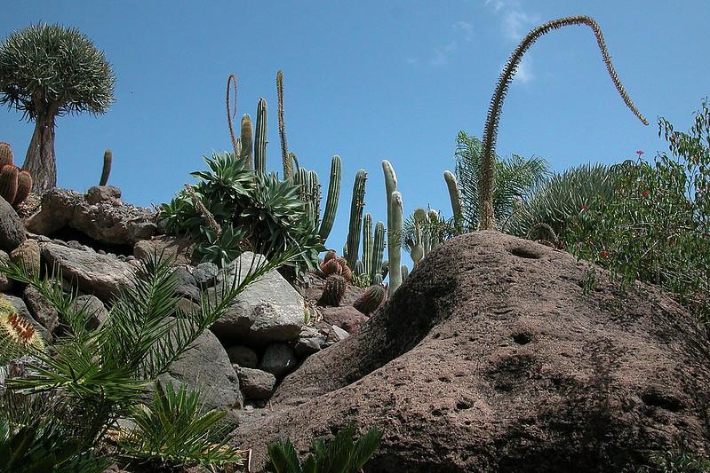 Gran Canaria_cactus