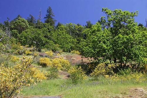 Hilltop at Bear Hill Park, Saanich, Victoria, Vancouver Island, British Columbia, Canada