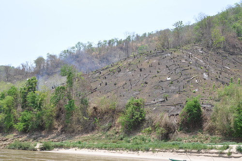 Slash and burn- so deforestation- damn! | by shankar s.