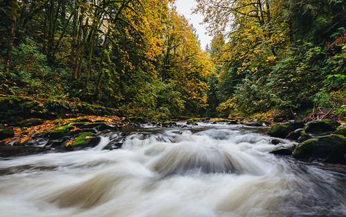 woodland washington cedarcreekgristmill nature river autumn fall trees pacificnorthwest autumncolors canoneos5dmarkiii canonef1635mmf4lis wallpaper background