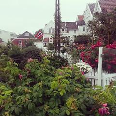Gamle Stavanger #norway