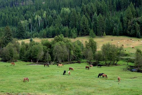 horse highway llama columbia crowsnest british kootenay