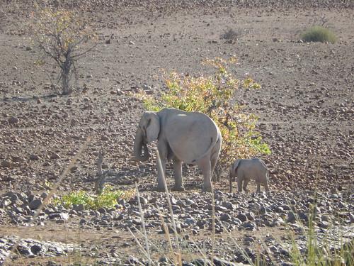 Palwag - olifanten bij lodge