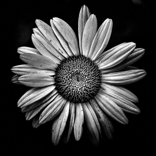 Backyard Flowers In Black And White 13 | by thelearningcurvedotca