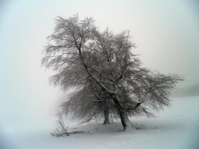 Baumimpressionen