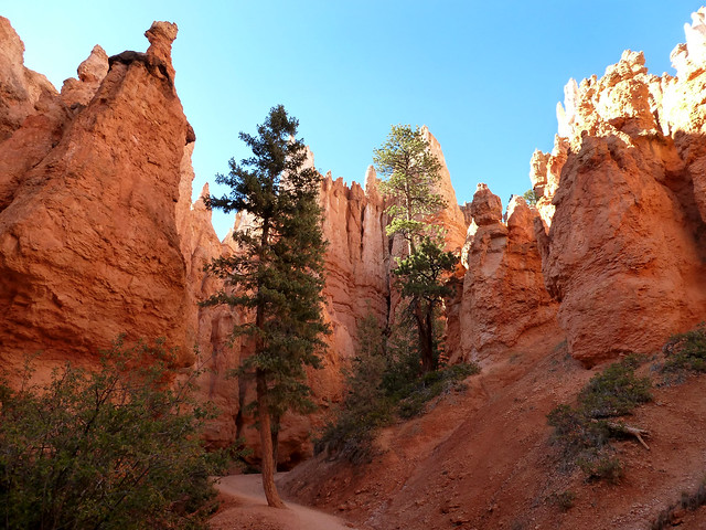 Navajo Loop Trail - Bryce Canyon National Park, Utah