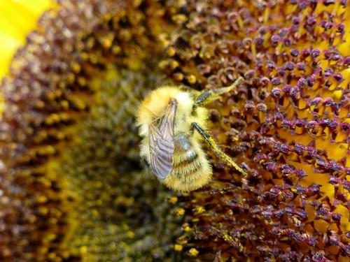 Pollination (20/09/2013)