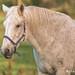 סוס - Photo (c) Melissa Sundman,  זכויות יוצרים חלקיות (CC BY-SA)