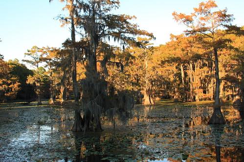 park camping lake october texas hiking swamp texasstatepark caddolakestatepark 2013