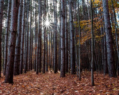 trees sunset ohio nature canon landscape ruralohio toledometroparks oakopeningspreserve
