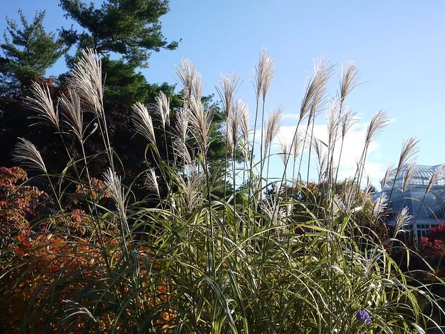 日, 2013-11-03 14:50 - Bronx Botanical Garden