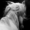 horse_A.P (16)