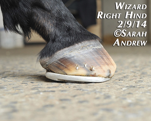 Wizard's New Rocker Shoes | by Rock and Racehorses