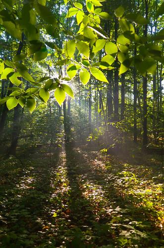 trees light leaves forest sunrise landscape spring woods glow flare beech