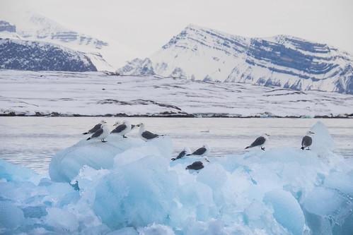 norway svalbard noorwegen spitsbergen barentszburg eilandengroeparchipel pyramiden longyearbyen nyalesund sneeuwscooter snowscooter snow nyålesund sj