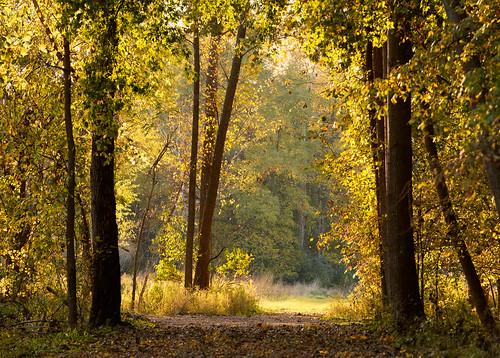 bicentennialpark kalamazoocounty michigan portage autumn fall goldenhour landscape nature outdoor woods unitedstates us explored