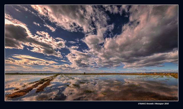 Reflexos a la marjal de Sueca 37 (Sueca's marsh reflections 37) Sueca, la Ribera Baixa, València, Spain