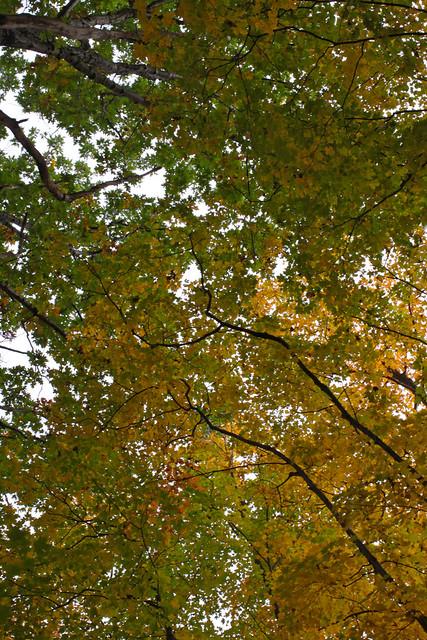Terra Cotta Conservation Area in Autumn 2013