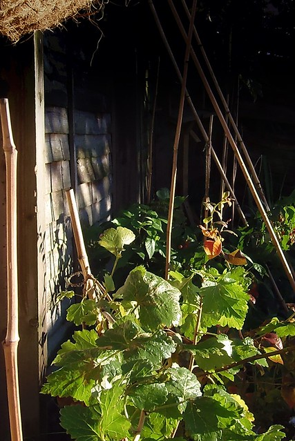 ~ Our fruit patch in Autumn :) xxx