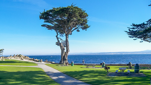 Cypress at Lover's Point Park, Monterey Bay | by Ed Suominen