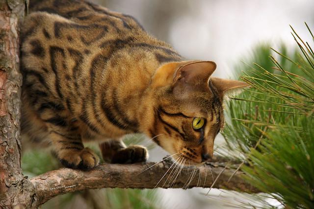 Flashy on his favorite Tree