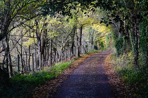 autumn northsomerset wraxall england trees leaves path landscape tyntesfield outdoor outdoors forest wood sony a6000 nature