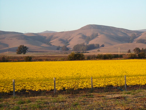 Along Los Osos Valley Road